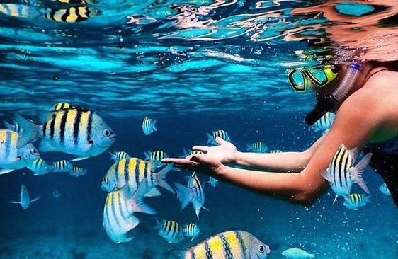 Thai Snorkel